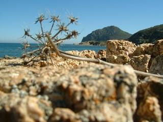 CapoFerratoCostaReiSardegnawww.costarey.net.jpg
