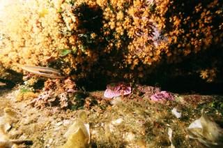 DivingMuraveraCostaReiHotelDomuIncantada1.jpg
