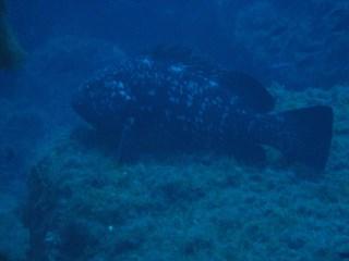 DivingMuraveraCostaReiHotelDomuIncantada7.jpg